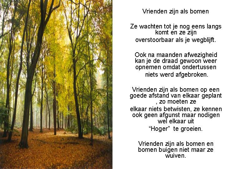 vrienden-zijn-als-bomen