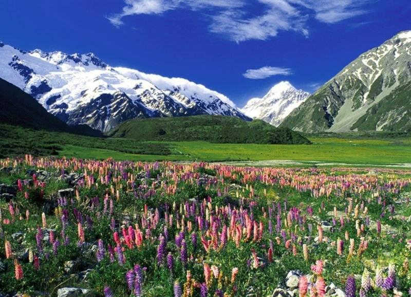 Bloemen en bergen