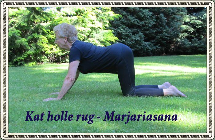 Kat holle rug - Marjariasana