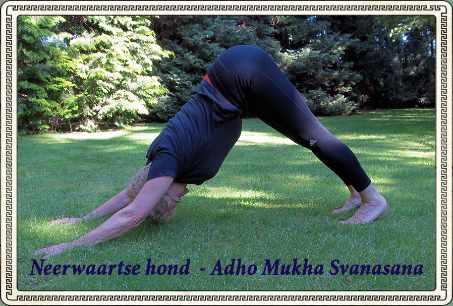Neerwaartse hond - Adho Mukha Svanasan