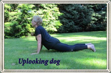 uplooking dog